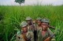 盜獵者在非洲國家公園屠殺了數十隻大象