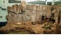 《白熊計畫》– 西安曲江極地海洋公園