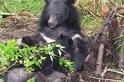 【華人探險家專欄 ─ 黃美秀】精通十八般武藝的台灣黑熊