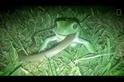 驚悚畫面:這是個蛙吞蛇的世界