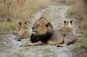 這位獅子專家因揭發貪腐而遭坦尚尼亞禁止入境