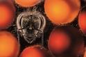 打造超級蜜蜂