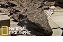 來自加拿大的完美化石宛如沉睡中的「石中龍」