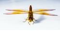 酷知識測驗:你一定不知道的昆蟲酷知識