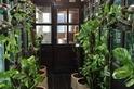 居家植物可淨化霧霾?