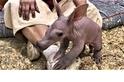 「溫索」是一隻醜得可愛的土豚寶寶!