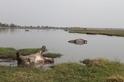 納米比亞的上百頭河馬疑似死於炭疽病