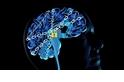成癮的科學––受毒品影響的大腦
