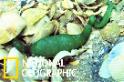 這條看似「異星蠕蟲」的綠色生物究竟是什麼?