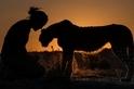 夕陽下的散步:獵豹之愛