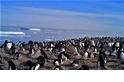 出乎意料!南極發現有150萬隻企鵝的超級族群!