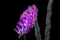 酷知識測驗:關於花花草草的一些事
