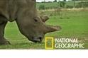 體外人工受孕技術是否能救回即將滅絕的北白犀?