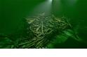 高解析影像揭開受詛咒古沉船的神秘面紗