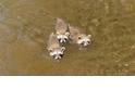 可愛直擊:三隻浣熊寶寶與漁夫變成了朋友!