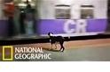 狗狗每天準時出現在火車站,難道是「忠犬八公」翻版?