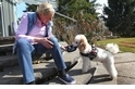 狗兒如何能嗅出糖尿病&癌症