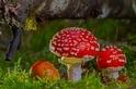 酷知識測驗:不可思議的真菌知識