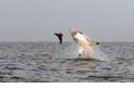 圖集:與海洋動物面對面
