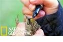 科學家幹嘛要在小鳥身上塗鴉?