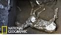 「來不及逃脫……」龐貝古城發現繫有韁繩的馬匹遺骸