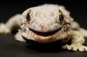 蜥蜴是否真如外表那般沉靜?