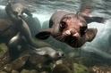 再近一點:加拉巴哥的水下世界