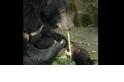 【華人探險家專欄 ─ 黃美秀】 臺灣黑熊價多少?生態系功能與保育角色