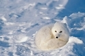 動物應付冬天小絕招