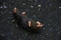 從一隻死在路上的鹿野氏鼴鼠說起