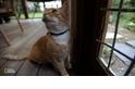 你的貓會走多遠?讓GPS告訴你