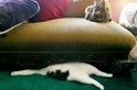 怪異動物問與答:貓咪的真相