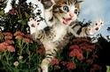 你真的了解你的貓嗎?