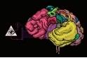 腦中乾坤:心智的生物學