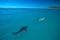 為什麼這張「終極鯊魚照片」會爆紅?