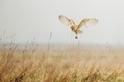 為什麼倉鴞要離婚?