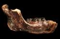 台灣考古大躍進:19萬年前的「澎湖原人」現身