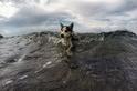 狗爬式衝浪