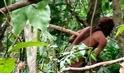 為何公開未曾與外界接觸的亞馬遜部落,或許有助於挽救他們?