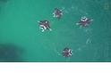 鬼蝠魟為何優雅地繞圈游泳?