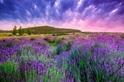南法普羅旺斯的紫色情迷(Sponsored)
