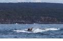 乘「鯨」破浪:搭鯨魚便車的海狗