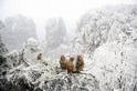 新春賞猴遊神州