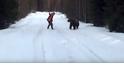 面對棕熊攻擊:瑞典男子的逆襲