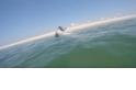 破水而出:大白鯊在科德角追捕海豹