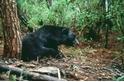 【華人探險家專欄 ─ 黃美秀】解碼中央山脈裡的黑盒子: 向陽山屋的黑熊之死