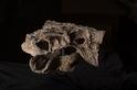 新物種:可能曾重傷蛇髮女怪龍的「脛骨毀滅者」