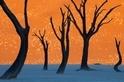 地球日圖集:樹的千姿百態