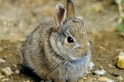 「兔」和「野兔」有什麼差別?