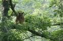 武陵暗夜迷蹤,尋找黃魚鴞